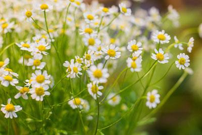 Blumenclaus Blumenwiese